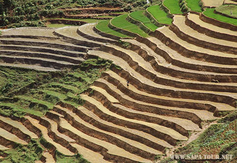Sapa erraced fields